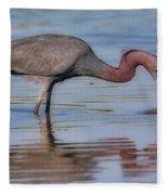 Juvenile Reddish Egret Fleece Blanket