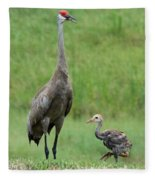 Juvenile Sandhill Crane With Protective Papa Fleece Blanket
