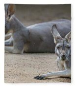 Kangaroo Relaxing On Ground In The Sun Fleece Blanket