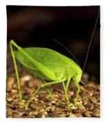 Katydid Close Up Bug Fleece Blanket