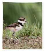 Killdeer - 24 Hours Old Fleece Blanket
