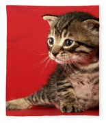 Kitten On Red Fleece Blanket