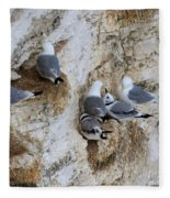 Kittiwakes Tend Their Chicks At Rspb Bempton Cliffs Fleece Blanket