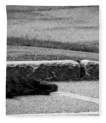 Kitty In The Street Black And White Fleece Blanket