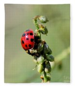 Lady Beetle Fleece Blanket
