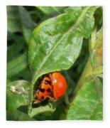 Lady Bugs Fleece Blanket