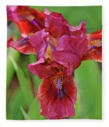 Lady In Red Iris Fleece Blanket
