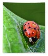 Ladybug With Dew Drops Fleece Blanket