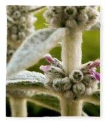 Lamb's Ear Fleece Blanket