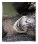 Lazy Chimp - Lowry Park Zoo Fleece Blanket