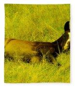 Lazy Colt Fleece Blanket