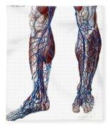 Leg Blood Vessels, Anatomical Fleece Blanket