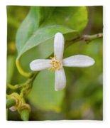 Lemon Blossoms 1 Fleece Blanket