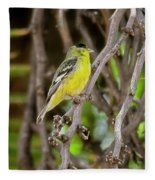 Lesser Goldfinch H57 Fleece Blanket