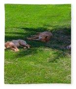 Let Sleeping Dogs Lie Fleece Blanket