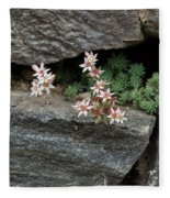 Life On Bare Rock - Pale Pink Succulents On The Wall Fleece Blanket