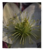 Light And Shadow Hellebore Flower Fleece Blanket