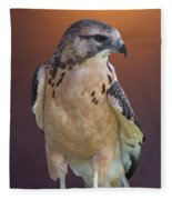 Light Morph Immature Swainsons Hawk Fleece Blanket