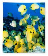 Lined Butterflyfish Fleece Blanket
