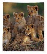 Lion Cubs Fleece Blanket