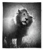 Lion Shaking Off Water Fleece Blanket