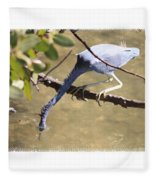 Little Blue Heron Going For Fish With Framing Fleece Blanket
