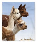 Llama's Three Fleece Blanket