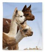 Llama's Three Fleece Blanket