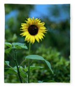 Lone Sunflower  Fleece Blanket