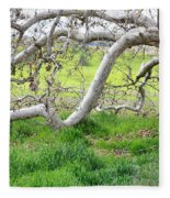 Low Branches On Sycamore Tree Fleece Blanket