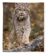 Lynx Kit Fleece Blanket