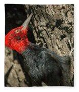 Magellanic Woodpecker - Patagonia Fleece Blanket
