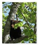Maine Black Bear Cub In Tree Fleece Blanket
