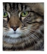 Maine Coon Cat Portrait Fleece Blanket