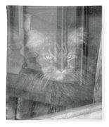Maine Coon In Window Fleece Blanket