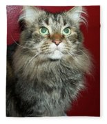 Maine Coon Portrait Fleece Blanket