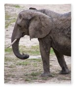 Majestic Elephant  Fleece Blanket
