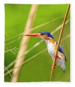 Malachite Kingfisher On The Hunt Fleece Blanket