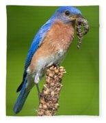 Male Bluebird With Larvae Fleece Blanket