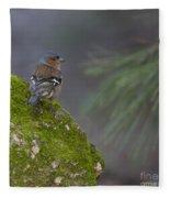 Male Common Chaffinch  Fleece Blanket