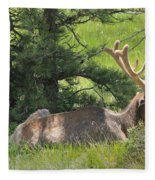 D10271-male Elk 2  Fleece Blanket