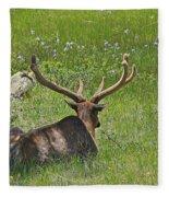 D10270-male Elk  Fleece Blanket