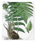 male fern, Dryopteris filix-mas Fleece Blanket