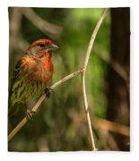 Male Finch In Red Plumage Fleece Blanket