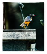 Male Oriole  Fleece Blanket