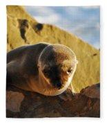 Malibu California Baby Sea Lion Fleece Blanket