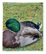 Mallard Resting Fleece Blanket