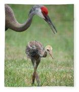 Mama And Juvenile Sandhill Crane Fleece Blanket