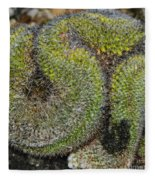 Mammillaria Red Cap Cristata Fleece Blanket