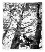 Maple Trees In Black And White Fleece Blanket